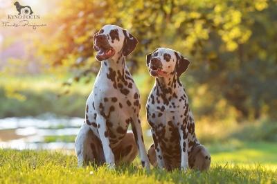 Spot & Ruby